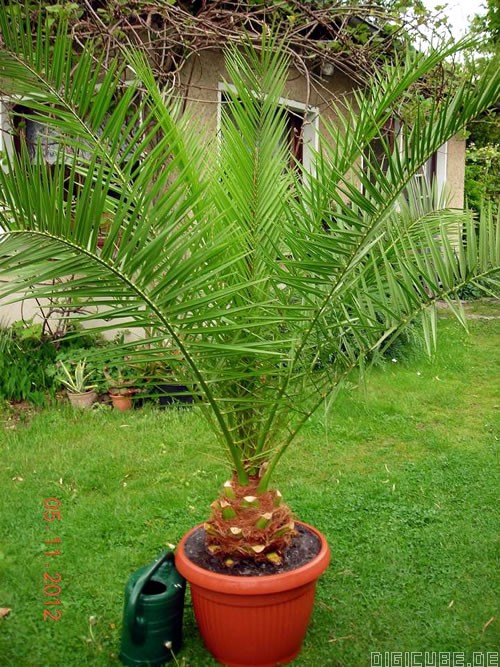 palmen im garten foto palmen im garten geo reisecommunity exotische palmen im garten s dliches. Black Bedroom Furniture Sets. Home Design Ideas